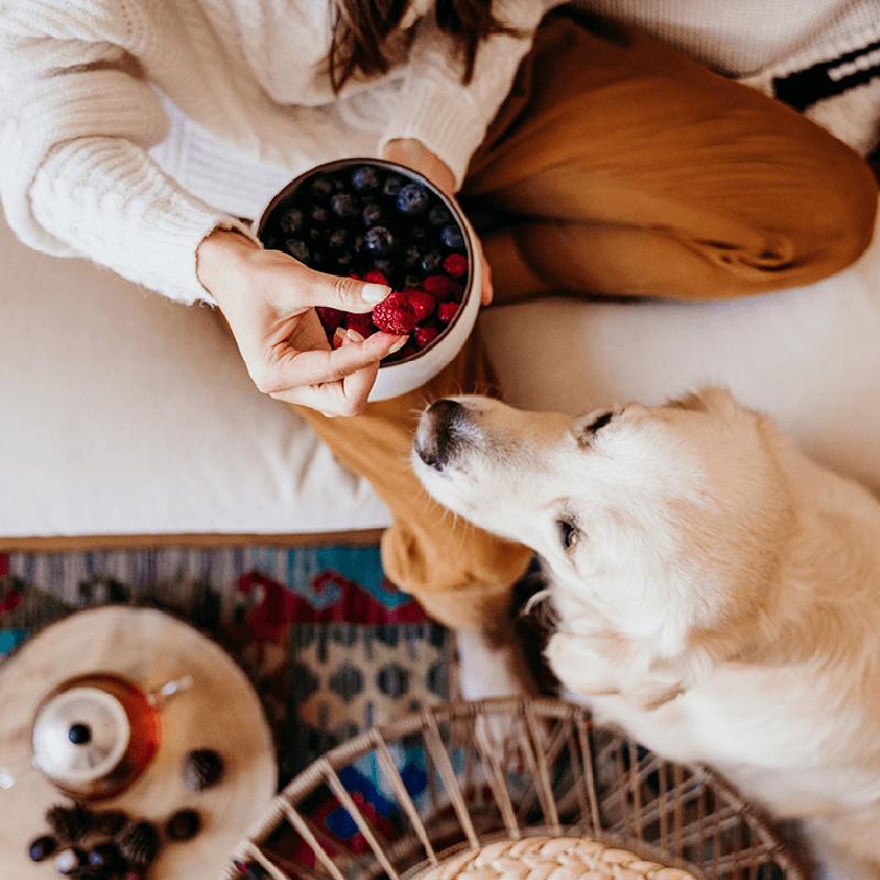 Reformhaus Bacher – Gesunde Frühstücksideen für einen ausgewogenen Start in den Tag